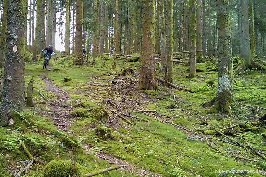 Spot Check Vogesen Moos Forest